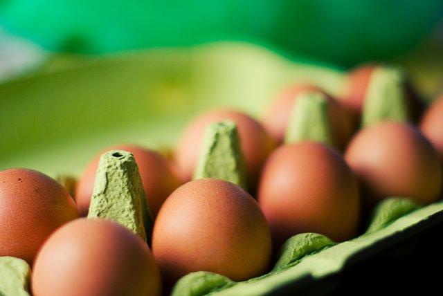 eieren fipronil