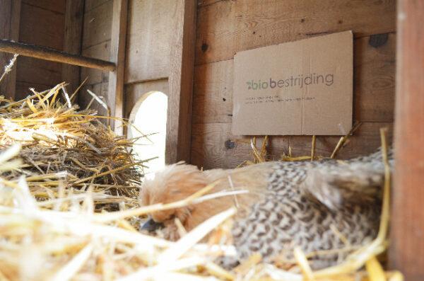 Bloedluisval kippenhok - Biobestrijding