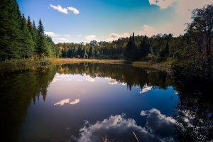 blauwalg in meren