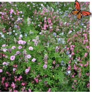 bloemenmengsel laag